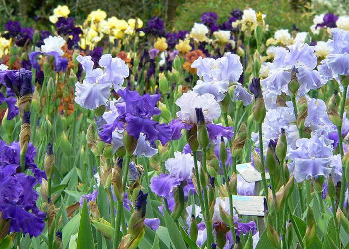 Il giardino dell 39 iris di firenze localit piazzale - Giardino dell iris firenze ...