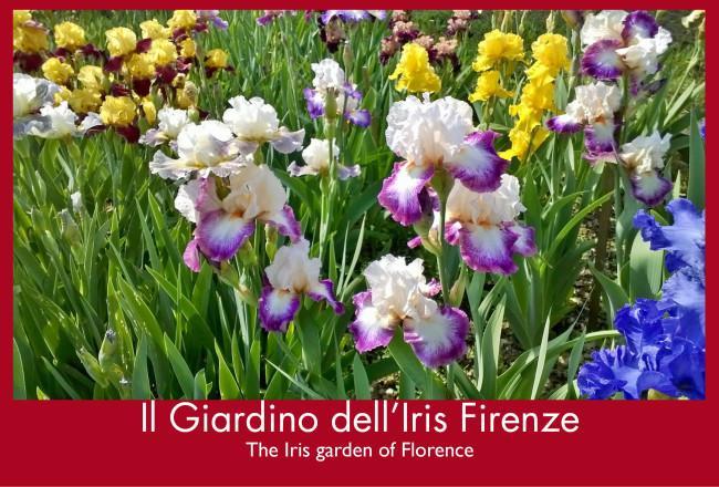 Il giardino dell'Iris