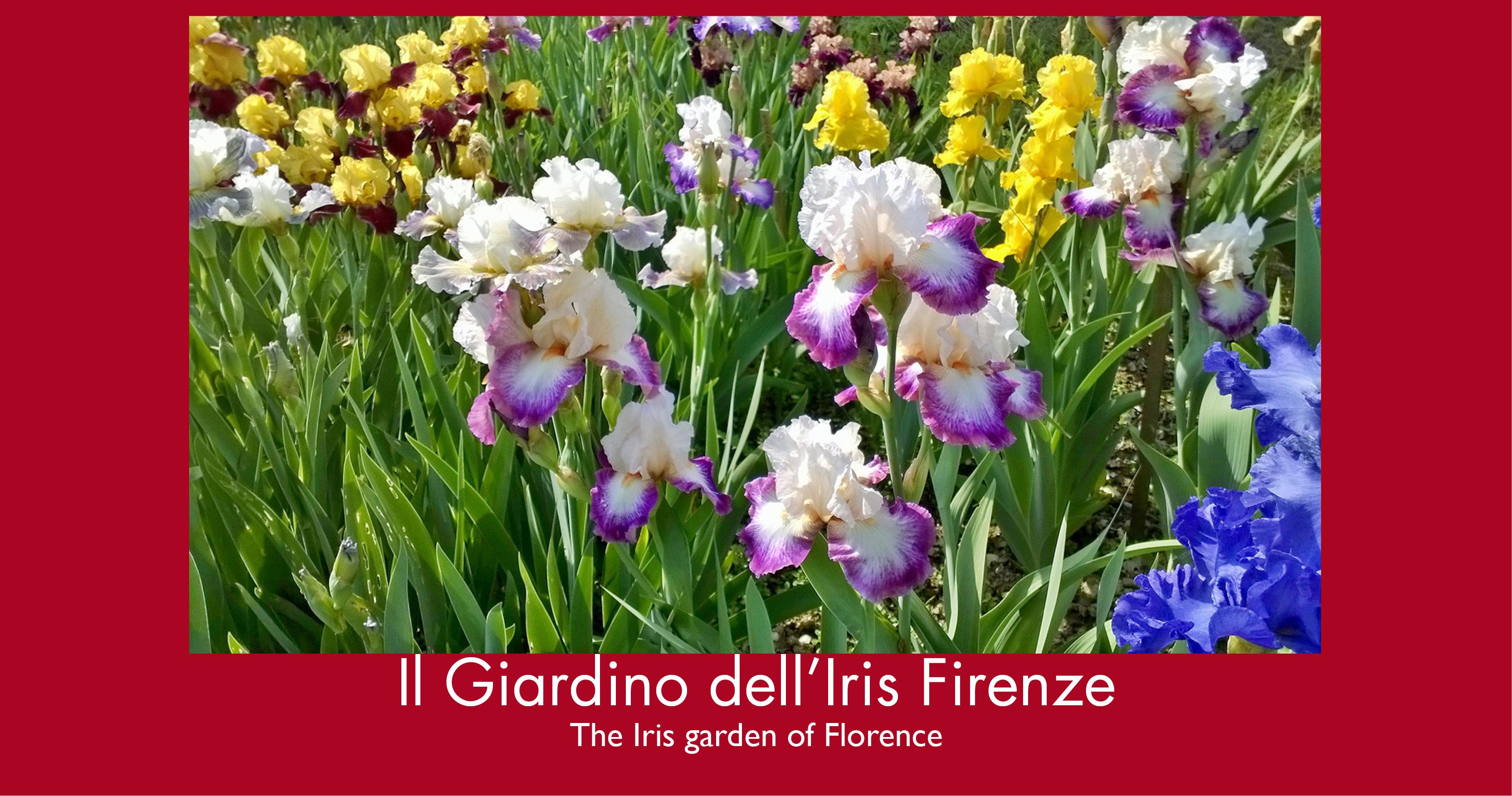 Firenze visita guidata al giardino dell 39 iris - Giardino dell iris firenze ...