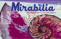 Mirabilia, mostra di Conchiglie da tutto il mondo