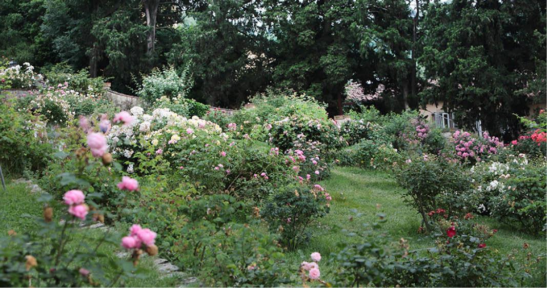 Il giardino delle rose, visita guidata