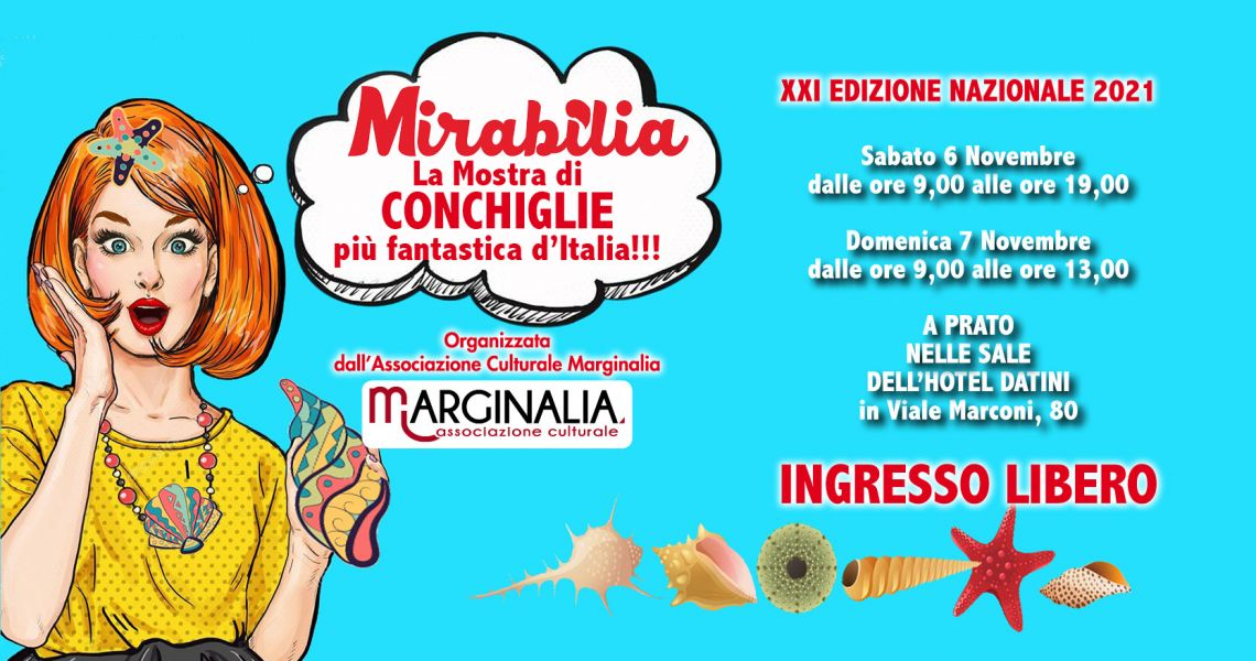 Mirabilia: mostra di conchiglie da tutto il mondo